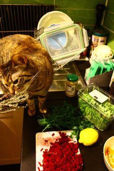 Luna schnuppert an frischem Thymian Plastik Box, Cat