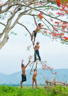 Climbing trees - Vietnam (The Eyes of Children Around the World) Boys love to climb trees
