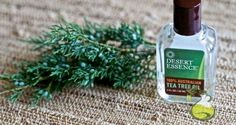 How to Make a Tea Tree Oil Toothpaste for Healthy Teeth and Gums - Oilypedia.com