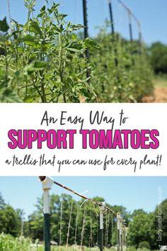 Veg Garden, Vegetable Gardening, Tomato Trellis, Wild Edibles, Backyard Farming, Organic Gardening Tips, Tomato Plants, Do It Yourself Projects, Raising Chickens