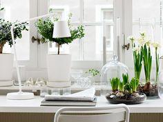 paperwhites and hyacinths on a desk office plants via Ikea l Gardenista Interior Inspiration, Design Inspiration, Ideas Prácticas, Office Plants, Deco Design, Design Trends, Decoration Table, Houseplants, Indoor Plants