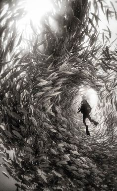 Alice Photo by Anuar Patjane — National Geographic Your Shot - Surrounded by a swarm of jack fish in Cabo Pulmo National Park, Mexico. Cabo Pulmo is the best example of a recovered reef in Mexican seas. Under The Water, Under The Sea, Fishing Photography, Underwater Photography, Nature Photography, Film Photography, Street Photography, Landscape Photography, Travel Photography