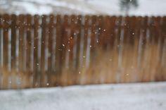 It's snowing in Colorado. Finally!
