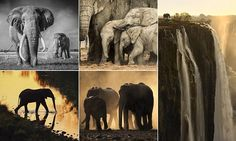 Lives of elephants featured in stunning exhibition of photographs