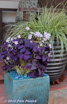 """potted purple oxalis in a pretty blue pot. It really pops against the bronze pots. Glass bead """"mulch"""" is the finishing touch"""