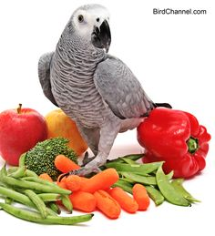 Find out if fruits or vegetables are better for birds, and how you can serve them to your parrots.