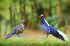 """""""Love At First Sight.""""              (Photo By: Sue Hsu on 500px.)"""