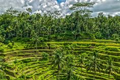 Balinese Rice Field HDR by Luis Aceves on 500px