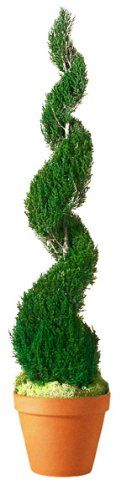 Forever Green Art Preserved Classic Spiral Juniper Topiary with Terra Cotta Pot, 72-Inch * Click image for more details.