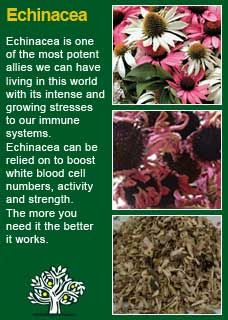 Richard Whelan ~ Medical Herbalist ~ Elder