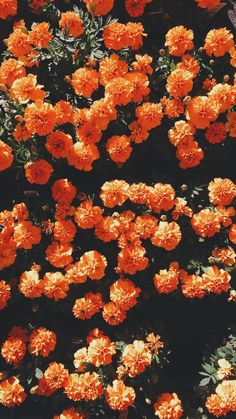 Find images and videos about flowers, wallpaper and orange on We Heart It - the app to get lost in what you love. Orange Wallpaper, Iphone 6 Wallpaper, Trendy Wallpaper, Flower Wallpaper, Nature Wallpaper, Wallpaper Backgrounds, Macbook Wallpaper, Wallpaper Ideas, Orange Aesthetic