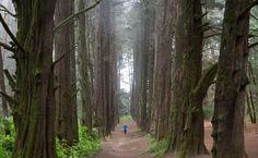 El Parque del Ocotal, el lugar ideal para conectarte con la energía de la Tierra