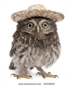 Owls Isolated Stock Photos, Images, & Pictures   Shutterstock