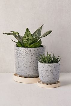 "Parker 4"" Planter + Drainage Tray Set 