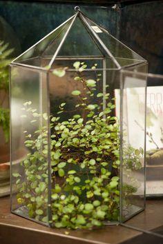 Wardian case style terrarium with fern