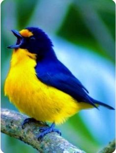 Beautiful colours Best Picture For two Birds Photography For Your Taste You are looking for somethin Beautiful Creatures, Animals Beautiful, Cute Animals, Cute Birds, Pretty Birds, Exotic Birds, Colorful Birds, Photo Animaliere, Most Beautiful Birds