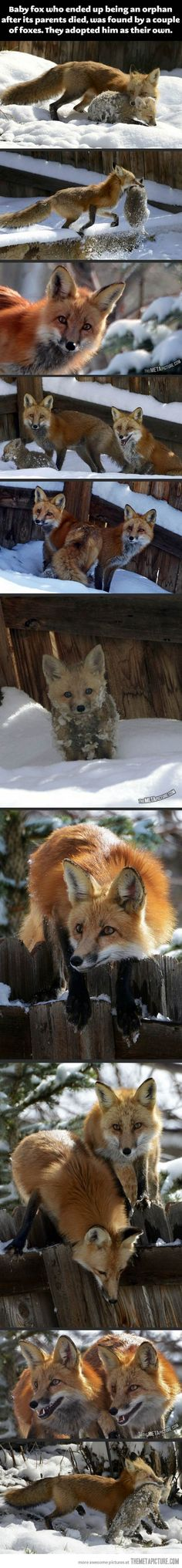 """All i can think of is my cousin when she finds scarfs, sunglasses, etc. left by her friends and goes """"this is mine now."""" The foxes are adorable too."""