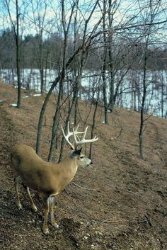 Perfect shot for a bowkill! ) hunting just for the fun of it is cruel Whitetail Deer Pictures, Deer Photos, Deer Pics, Hunting Shop, Deer Hunting, Whitetail Hunting, Hunting Stuff, Big Deer, Hunting Pictures