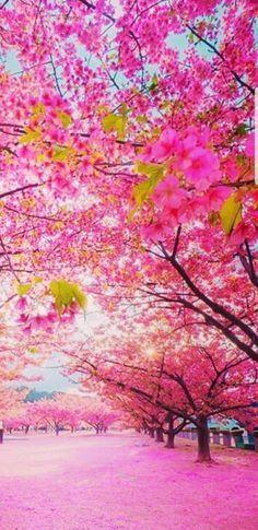 Hello Spring, Nature, Cherry, Trees, Painting, Beautiful, Flowers, Naturaleza, Tree Structure