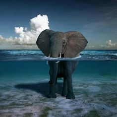 Elephant standing in the water