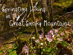 Springtime Hiking in the Smoky Mountains one of my most favorite things to do