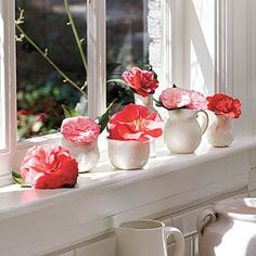 Winter Flowers for Your Windowsill | Camellia Windowsill | SouthernLiving.com