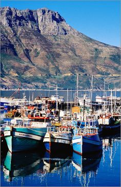 Fishing boats in Hout Bay Marina, Western Cape, South Africa by Craig Pershouse -