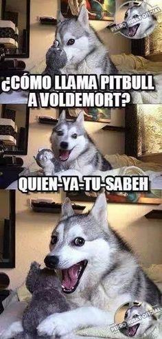 Y así fue como Pitbull murió de un Avada Kedavra. | 18 Memes de Harry Potter tan chistosos que hasta harán reír a Voldemort