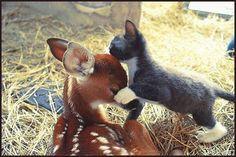 Bambi has a friend.