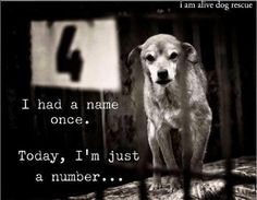 heartbreaking indeed...WHY did it come to this?!?!   I HAD A NAME ONCE.  TODAY, I'M JUST A NUMBER...If you live in or near Brockville, Ottawa or Montreal, please consider fostering. These dogs are often on death row & we need to move quickly to pull them. All dogs are given an initial assessment before going to a foster family. If you are interested, please take a moment to fill out our application to foster a dog. www.iamalivedogrescue.com/about-iam-alive-dog-rescue.html HELP SAVE THESE…