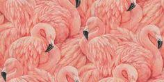 Resultado de imagem para wallpaper flamingo