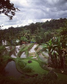 • Jatiluwih, Bali •