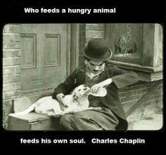 Who feeds a hungry animal feeds his own soul ~ Charles Chaplin...