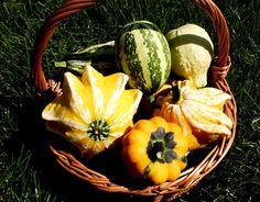 Sai coltivare l' #orto? #giardinaggio