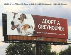 Retired Greyhound - Bing Images