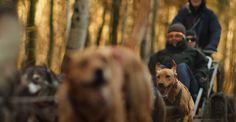 Schlittenhunde-Fahrt in Neu Benthen Raum Schwerin #Schlittenhunde #Hunde #huskytouren