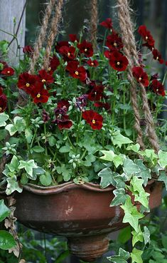 Ivy and Pansy urn with rope to hang it up.  Like the contrast of the metal urn, natural rope, and plants.