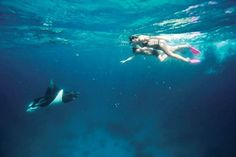 Visit Lady Elliot Island, where you'll find not only over 1,500 species of fish, for a chance to snorkel with manta rays