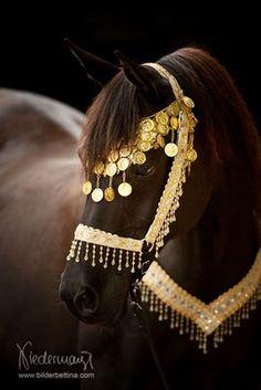 Araber - Pferdefotografie, Hundefotografie, Fotografie Bettina Niedermayr Pferde - Mensch & Pferd - Hunde- Portrait - Stallschilder - Kalender, Pferdekalender, Haflingerkalender mit Kohlfuchs Liz. Steiermark