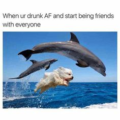 When your drunk AF and starts being frieds with everyone. (Not cats)