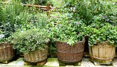 Herbs in baskets.
