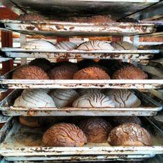 Conchas de pan dulce <3