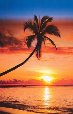 The image is focused on the dark palm tree as well as the sunset in the background.