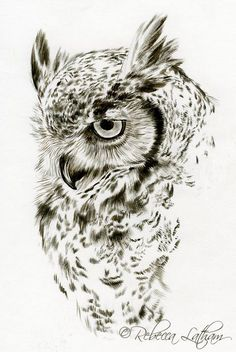 Draw owl inspiration