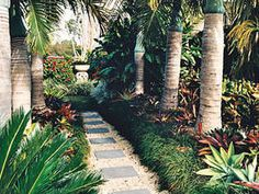 Tropical garden design the imperial palm in space spaces