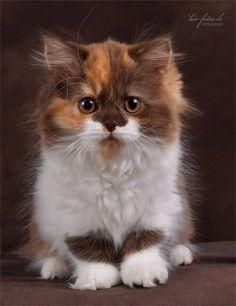 Aren't I pretty?