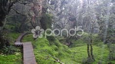 Steps in the Rainforest - Stock Footage   by JahnProductions