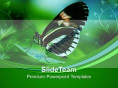 Papilio Butterfly On Leaves Nature PowerPoint Templates PPT Themes And Graphics 0213 #PowerPoint #Templates #Themes #Background