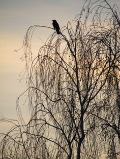 This is a view I have out of one of my windows.There's a tree that a crow likes to perch on and I see him a few times a day there. It's funny that someone else has the same view