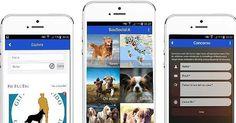 BIG NEWS!  Scarica dal link in bio la nostra app seguendo le istruzioni che trovi sulla pagina!  #BauSocial  Grazie a @rcnetwork.it  #app #milano #cane #dog #dogs #cani #instadog #doglovers #roma #palermo #torino #lecce #pescara #bari #messina #bologna #monza #cagliari #aosta #android #iphone #salento #venezia